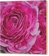 Spring Pink Roses Wood Print