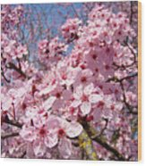 Spring Pink Tree Blossoms Art Print Baslee Troutman Wood Print