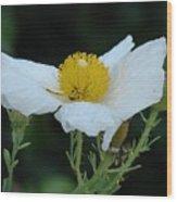 Spring Poppy Wood Print