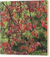 Spring Rain In Descanso Gardens Wood Print