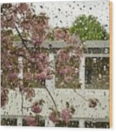 Spring Rain Outside The Window And Sakura Wood Print