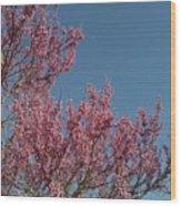 Spring Redbud Tree Wood Print