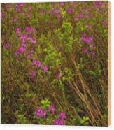 Spring Rhodora Blossoms Wood Print