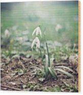 Spring Rising Wood Print by Heather Applegate