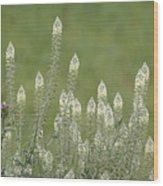 Spring Rockets Wood Print