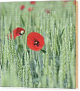 Spring Scene Green Wheat And Poppy Flowers Wood Print