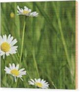 Spring Scene White Wild Flowers Wood Print