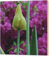 Spring Series #05 Wood Print