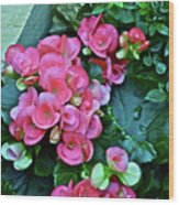 Spring Show 17 Begonias And Roses Wood Print