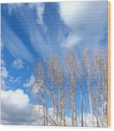 Spring Sky And Cotton Trees Wood Print
