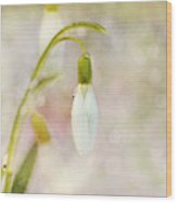 Spring Snowdrops And Bokeh Wood Print
