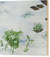 Spring Snowdrops Wood Print