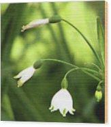 Spring Snowdrops Wood Print