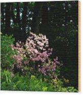 Spring Spotlight Wood Print