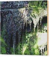 Spring Sprung  Wood Print