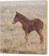 Spring Storm Foal Wood Print