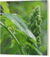 Spring Sumac Wood Print
