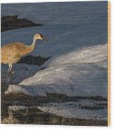 Spring Sunset With Sandhill Crane Wood Print