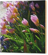 Spring Tenderness Wood Print