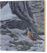 Spring Thaw - American Robin Wood Print