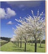 Spring Time #5 Wood Print