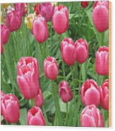Spring Time Floral Tulips Galore Wood Print