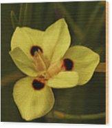 Spring Time In Florida Wood Print