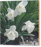Spring Time Trumpets  Wood Print