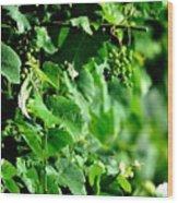 Spring Time Vineyards Wood Print