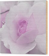 Spring Time With Lavender Rose Wood Print