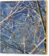 Spring To Life Wood Print