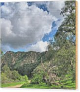 Spring Trail In The Canyon Wood Print