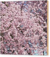 Spring Trees Art Prints Pink Springtime Blossoms Baslee Troutman Wood Print