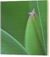 Spring Tulip Wood Print