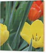 Spring Tulips 144 Wood Print