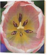 Spring Tulips 174 Wood Print