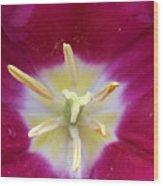 Spring Tulips 187 Wood Print