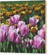 Spring Tulips 2 Wood Print