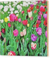 Spring Tulips Flower Field I Wood Print
