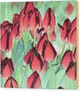 Spring Tulips - Photopower 3012 Wood Print