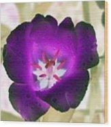 Spring Tulips - Photopower 3028 Wood Print