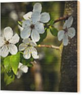 Spring Twig With White Florets Wood Print