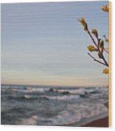 Spring View Wood Print