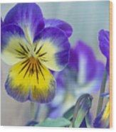 Spring Violas Wood Print