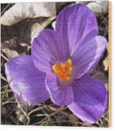 Spring Violet Wood Print