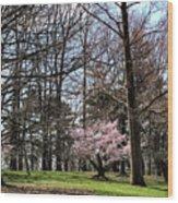 Spring Walk On Campus Wood Print