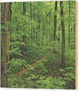 Spring Walk Wood Print
