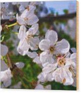 Spring White Wood Print