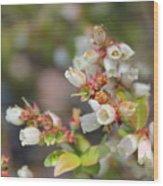 Spring Wildflower Wood Print