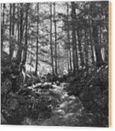 Spring Wood Wood Print